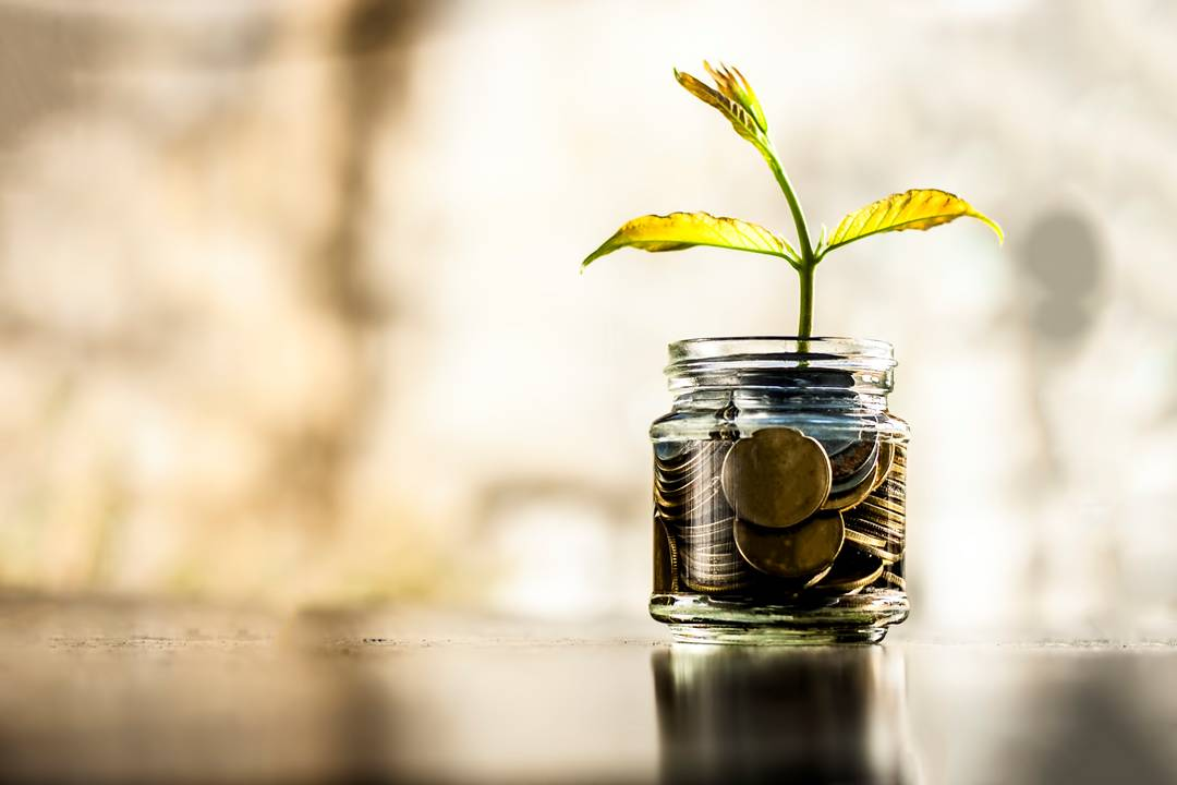 Money in a jar with plant growing out signifying growing wealth